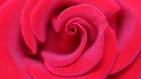 rose-3147320_640.jpg